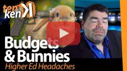 Budgets & Bunnies